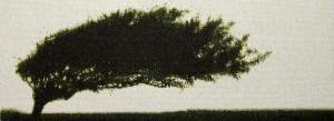 cropped-image-1.jpg